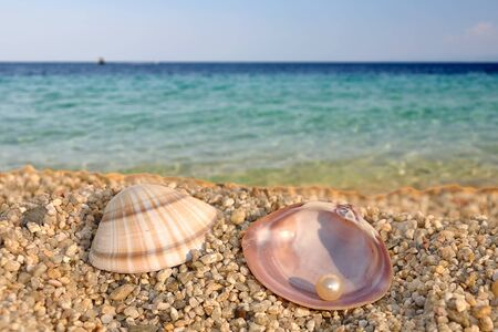 Summer scene #2 - sea shell and the pearl photo