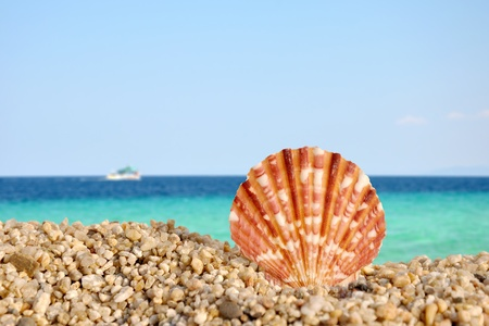 Summer scene #3 - sea shell on the beach
