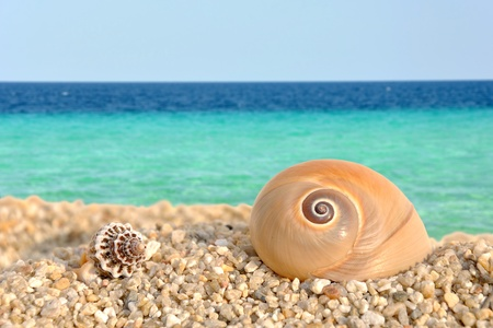 Summer scene #1 - sea shells on the beach Stock Photo