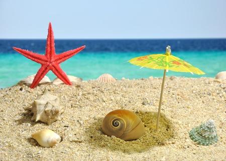 Summer scene - nautilus catching shadow Stock Photo