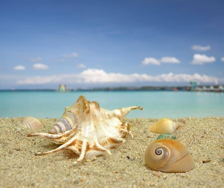 Summer scene #15 - Sea shell on the beach Stock Photo