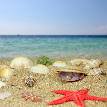 Summer scene #14 - Sea shells and perls