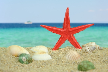 Summer scene #12 - Red Starfish on beach