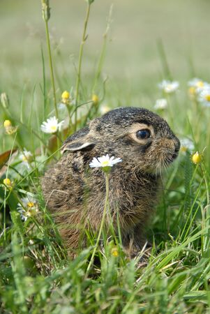 small wild rabbits in the flowers
