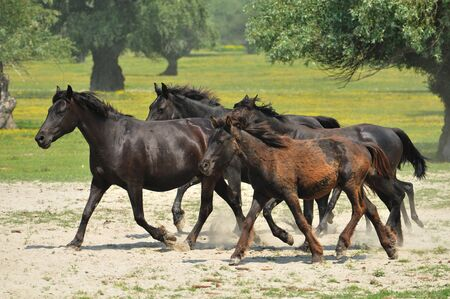 galloping horse pastures Stock Photo - 10833106
