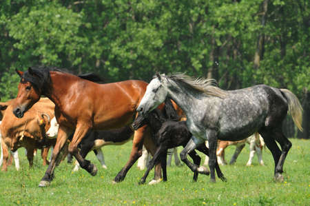 galloping horse pastures Stock Photo - 10833102