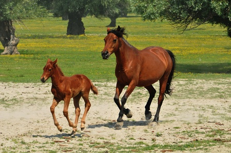 galloping horse pastures Stock Photo - 10833099