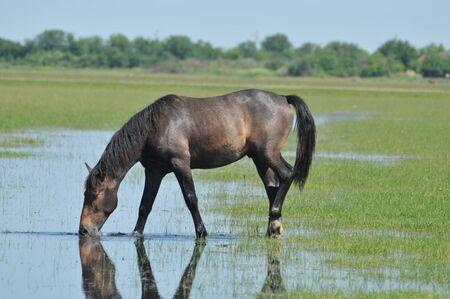 Horses at watering hole