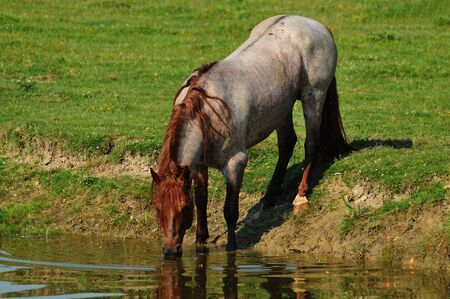 Horses at watering hole Stock Photo - 10884167