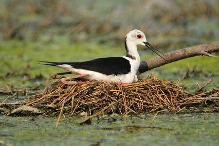 vogels op het nest
