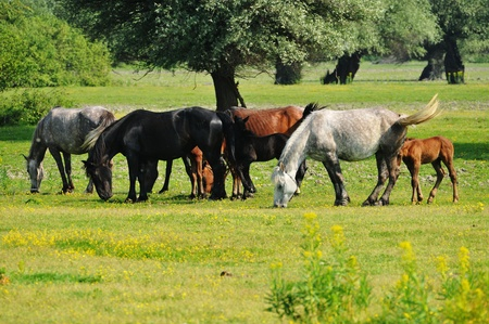 horses on the meadow Banque d'images