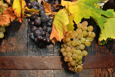 wooden barrel with grapes, white and red wine Stock Photo - 11082475