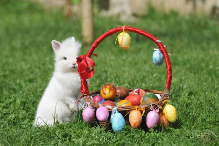 Nest with easter eggs and rabbit  photo