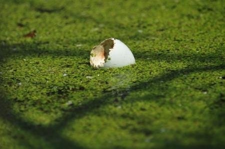 egg hatch photo