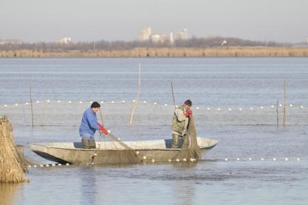 fishermen in the boat doing seasonal fish catch photo