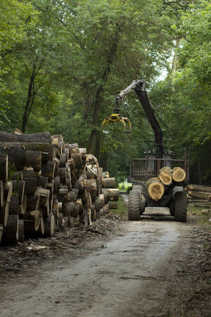 Freshly cut timber awaiting transportation photo