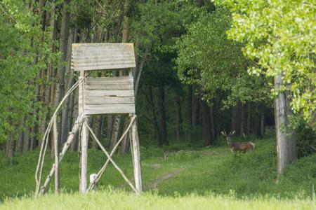 red deer: Red deer