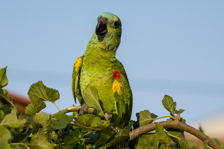 A parrot on a branch