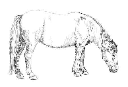 candid: horse grazing-sketch