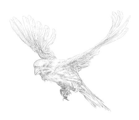 wild canary: Flying Canary