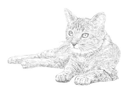 hairy legs: Cat - hand drawing Illustration