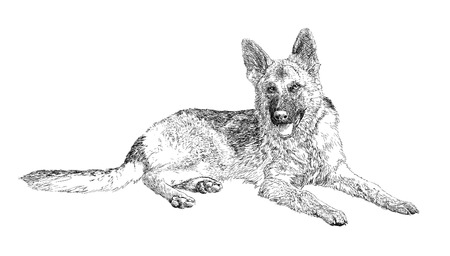 German Shepherd Ilustrace