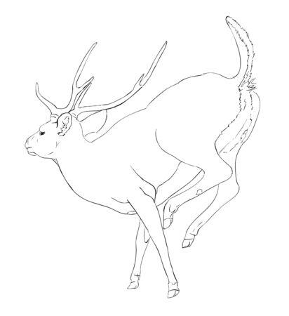hoofed mammal: Deer - sketch Illustration
