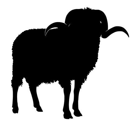 ungulate: Ram silhouette, black animal image isolated on white Illustration