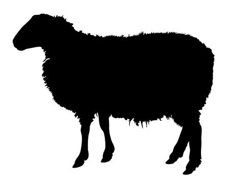 oveja negra: Imagen vectorial, silueta oveja con actitud derecha