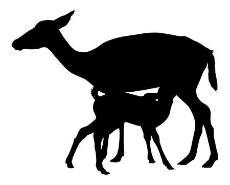 doe: Doe deer and fawn Illustration