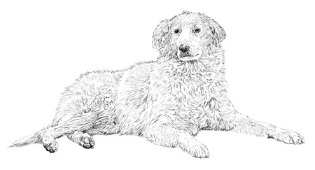 stray: Vector drawing of a lying stray dog Illustration