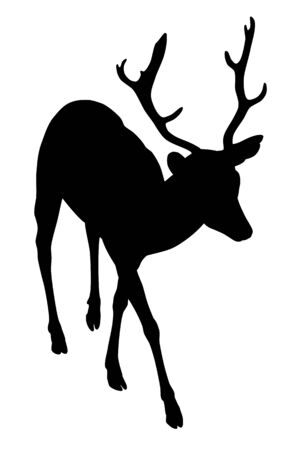 animal mating: A silhouette of a young male elk