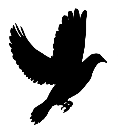 dove flying: Silhouette of a flying dove on a white background vector illustration