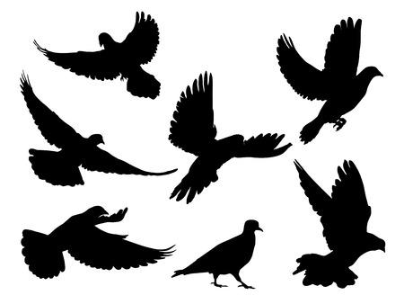 bandada pajaros: Siluetas de palomas en muchas posiciones y ángulos de vuelo diferentes