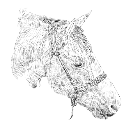 mere: Horse Head Sketch