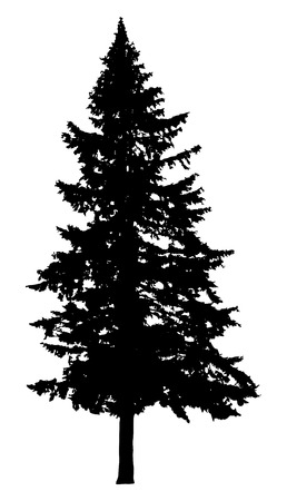 Pine tree silhouette isolated on white background Çizim