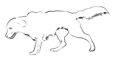 golden: Vector image of an golden retriever dog on white background