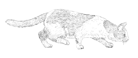 leaping: Cat drawing line-art Illustration
