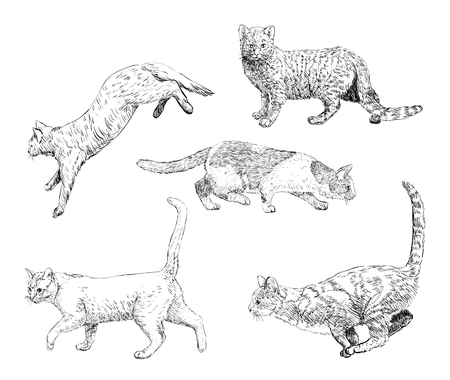 Set of hand drawn cats. Vector illustration