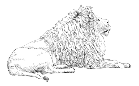 Engrave isolated lion vector illustration sketch