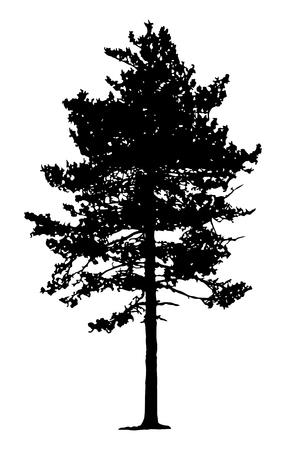 소나무 실루엣