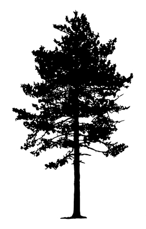 forestation: Pine Tree Silhouette