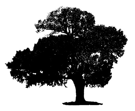 Tree silhouette on white background.