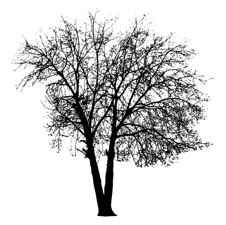 silueta del árbol en el fondo blanco. ilustración vectorial Ilustración de vector