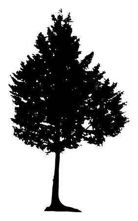 pine tree silhouette: Illustration with pine tree silhouette isolated on white background Illustration