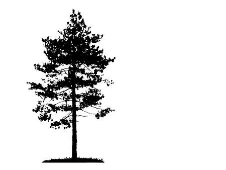 Ilustración con la silueta del árbol de pino aislado en el fondo blanco