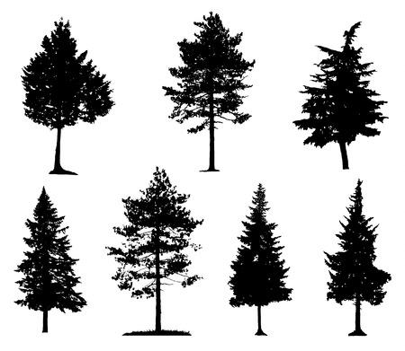 coniferous forest: Siluetas de los árboles de coníferas