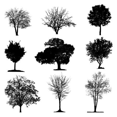 Drzewa sylwetka kolekcja Ilustracje wektorowe