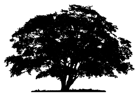 green and black: Tree silhouette on white background