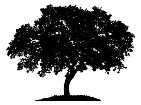 Tree silhouette su sfondo bianco Vettoriali